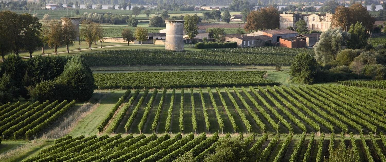 Champs de vignes en Gironde