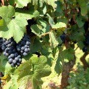 Beaune, capitale des vins de Bourgogne
