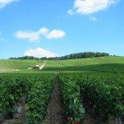 Vignes près d'Epernay. By Tom Corser